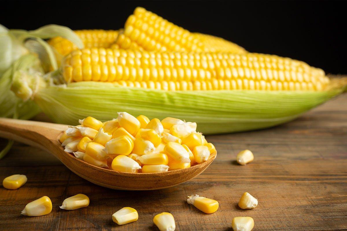 El maíz. Gastronomía mexicana